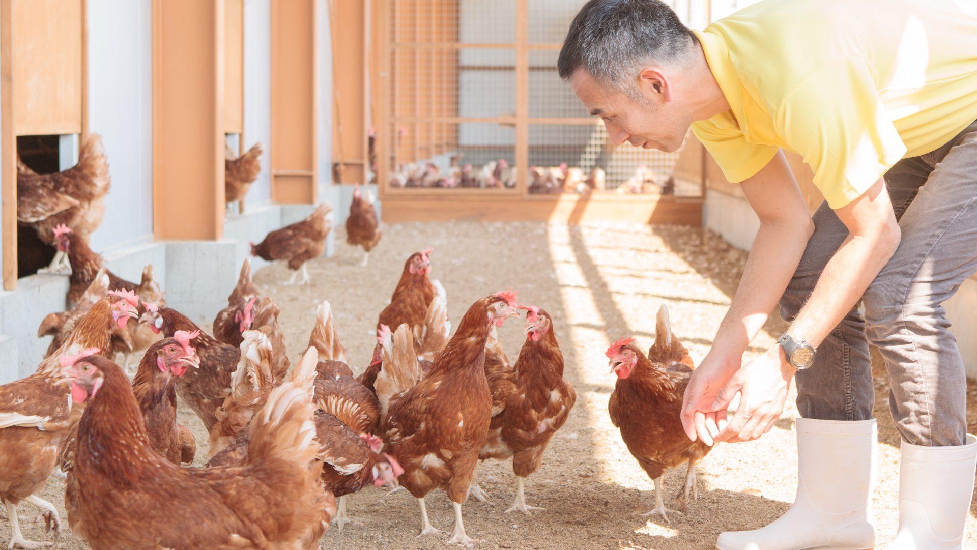 Maruichi Poultry Farm